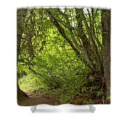 Garibaldi Old Growth Cedars Shower Curtain