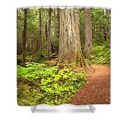 Garibaldi Wilderness Rainforest Shower Curtain