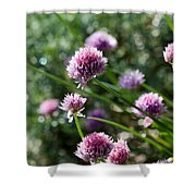 Garlic Chives Flowers Shower Curtain