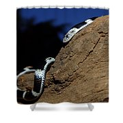Garter Snake Genus Elapsoidea Shower Curtain