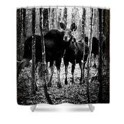 Gathering Of Moose Shower Curtain by Bob Orsillo
