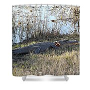 Gator Football Shower Curtain by Al Powell Photography USA