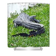 Gator In The Grass Shower Curtain