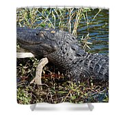 Gator On A Stick Shower Curtain