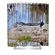 Gator On The Mound Shower Curtain