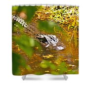 Gator On The Move Shower Curtain