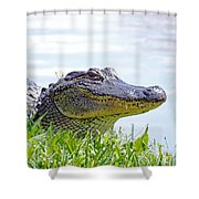 Gator Smile Shower Curtain