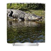 Gator Smile Shower Curtain