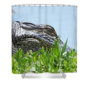 Gator Watching Shower Curtain