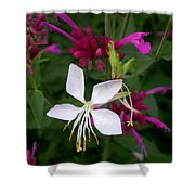 Gaura Lindheimeri Whirling Butterflies With Agastache Ava Shower Curtain