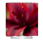 Gazer Red Angles Shower Curtain