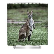 G'day Mate Shower Curtain