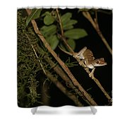 Gecko In The Night Shower Curtain