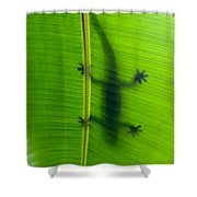 Gecko Silhouette Shower Curtain