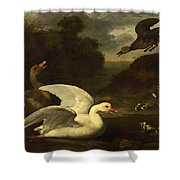 Geese And Ducks Shower Curtain