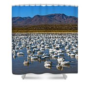 Geese At Bosque Del Apache Shower Curtain by Kurt Van Wagner