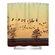 Geese In Flight I Shower Curtain