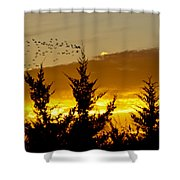Geese In Golden Sunset Shower Curtain