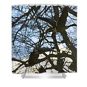 Geese In Twlight Sky Shower Curtain