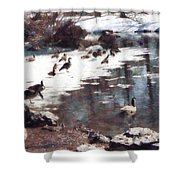 Geese On An Icy Pond Shower Curtain
