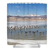 Geese On Ice  Shower Curtain