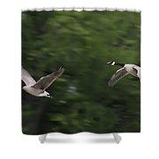 Geese Pair In Flight Shower Curtain