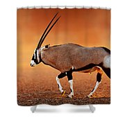 Gemsbok On Desert Plains At Sunset Shower Curtain