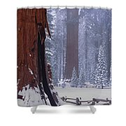 2m6835-general Sherman Tree - Giant Sequoias Shower Curtain