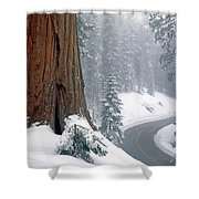 2m6836-generals Highway In The Giant Sequoias Shower Curtain