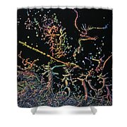 Genesis Shower Curtain by James W Johnson