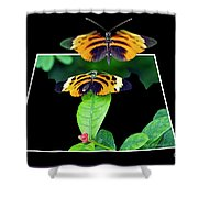 Gentle Butterfly Courtship 01 Out Of Bounds Shower Curtain