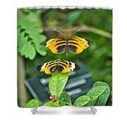 Gentle Butterfly Courtship 01 Shower Curtain