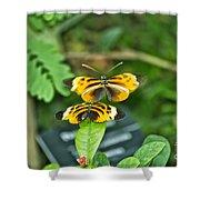 Gentle Butterfly Courtship 02 Shower Curtain