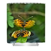 Gentle Butterfly Courtship 03 Shower Curtain