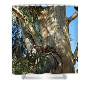 Gentle Calypso Three In Cantoria Village Spain  Shower Curtain