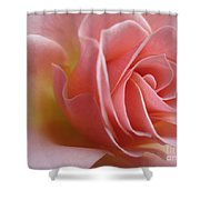 Gentle Pink Rose Shower Curtain