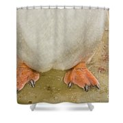 Gentoo Penguin Feet Shower Curtain