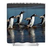 Gentoo Penguins Walking Shower Curtain by Hiroya Minakuchi