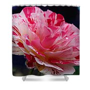 George Burns Floribunda Rose Shower Curtain
