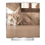George The Cat Shower Curtain
