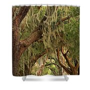 Georgia Golden Oaks Shower Curtain