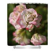 Geranium Flowers Shower Curtain