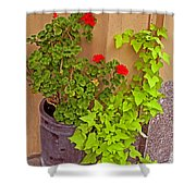 Geraniums And Ivy Shower Curtain