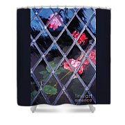 Geraniums Under Glass In Wales Shower Curtain