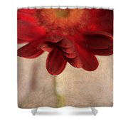 Gerber 01 Shower Curtain