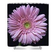 Gerber Daisy Flower Shower Curtain