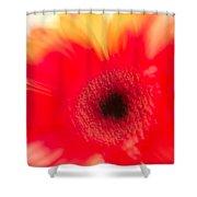 Gerbera Daisy Abstract Shower Curtain