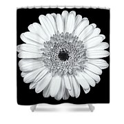 Gerbera Daisy Monochrome Shower Curtain by Adam Romanowicz