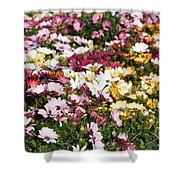 Gerbera Flowers Shower Curtain