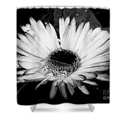 Gerbera In Black And White Shower Curtain